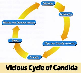 Cycle-of-candida